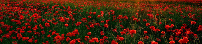 Remember What Is Important to You This Anzac Day